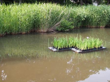 水質浄化装置desu