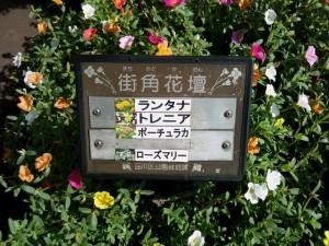花壇花の名前