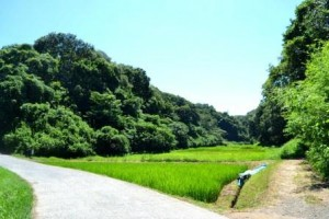 012雑木林の丘と谷戸田