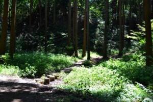 013ふるさとの森「沢」渡り石と木々