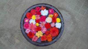 神代植物公園「大温室」に飾られていた水鉢