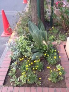 完成した花壇1