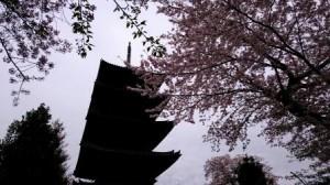 散り始め本門寺