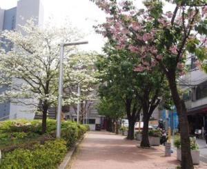 通りの風景