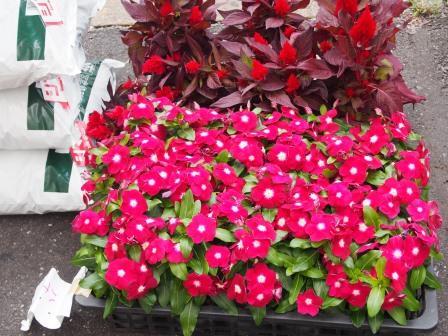 植え方お花2種類