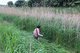 河川敷の自然植生生物-草刈