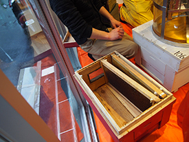 巣箱に入った蜜板。1枚の板からとれるはちみつは約2kg