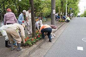 街路樹下に赤いサルビアを植える皆さん
