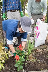 肥料をまいたら、花苗をやさしく植えます