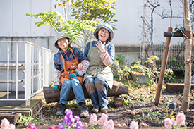 伐採された桜はベンチに!