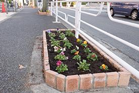 今日は7つの花壇に花を植えました