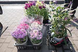 今回、花壇に植えられた花