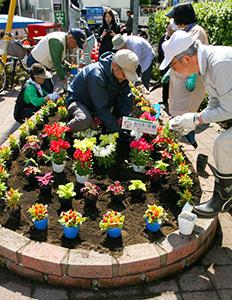 こちらは5月に行なった花苗の植付け風景